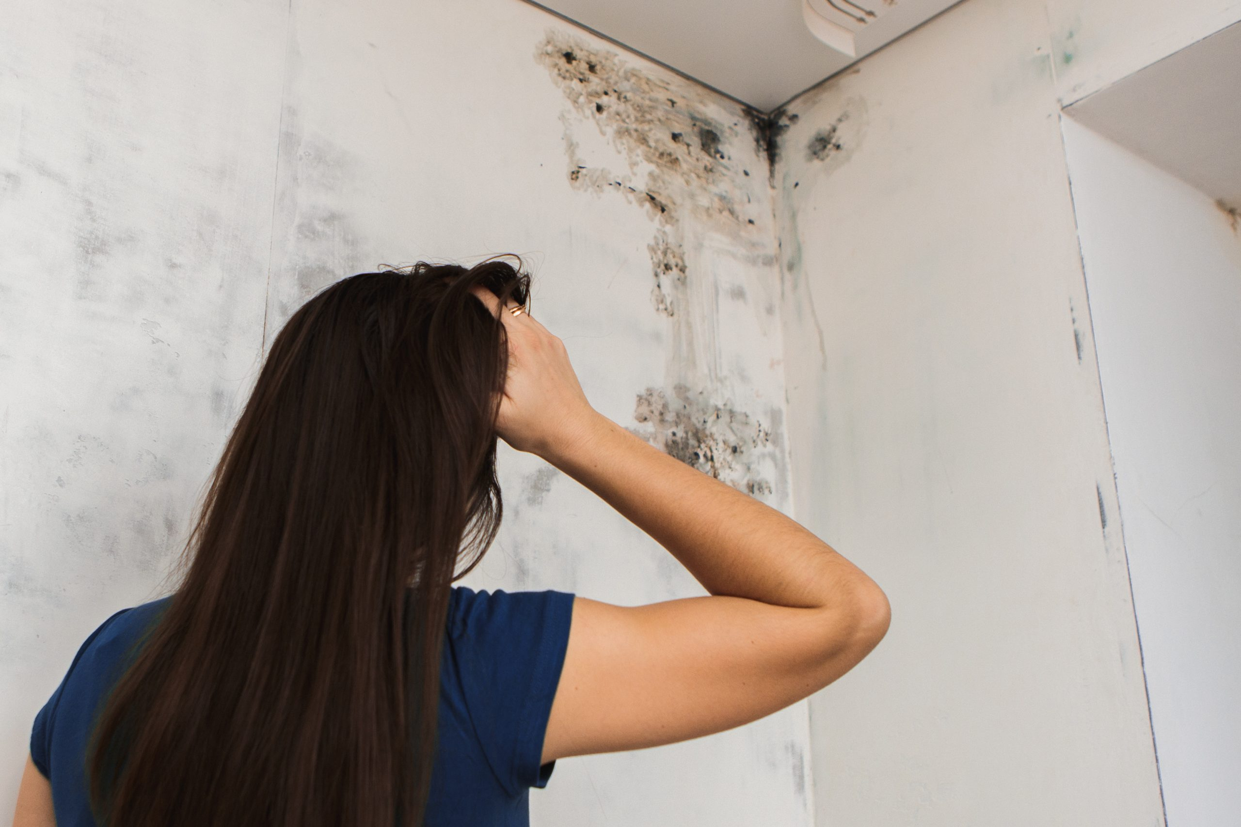 The Dangers Of Black Mold
